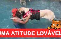 Este cão tinha medo de nadar, o seu dono teve uma atitude louvável!