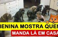 Menina de quatro anos mostra a seis pitbulls quem manda lá em casa